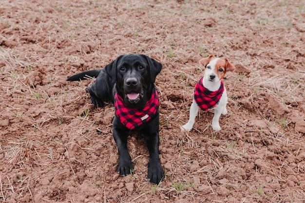 Twee mooie honden die moderne zwarte en rode bandanas dragen, op de grond zitten en de camera bekijken. huisdieren buiten