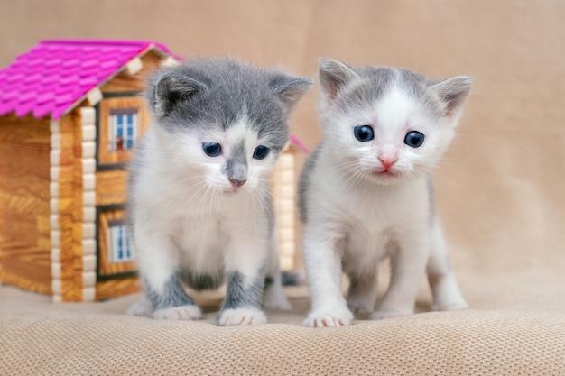 Twee mooie kleine katjes in de buurt van het speelgoedhuis. eigen huisvesting