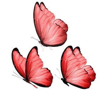 Twee mooie rode tropische vlinders geïsoleerd op een witte achtergrond. motten voor ontwerp