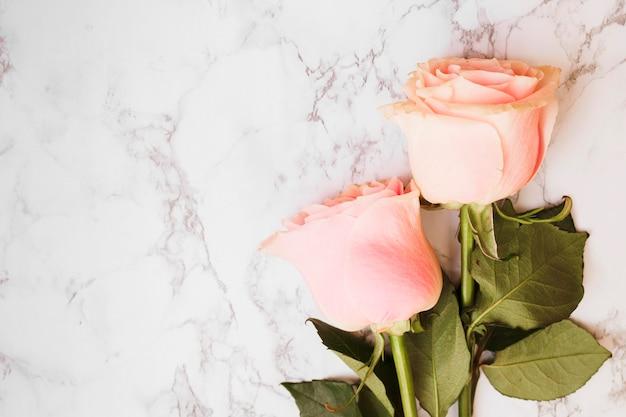 Twee mooie roze rozen tegen marmeren geweven achtergrond
