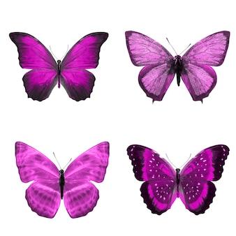Twee mooie violette tropische vlinders geïsoleerd op een witte achtergrond. motten voor ontwerp
