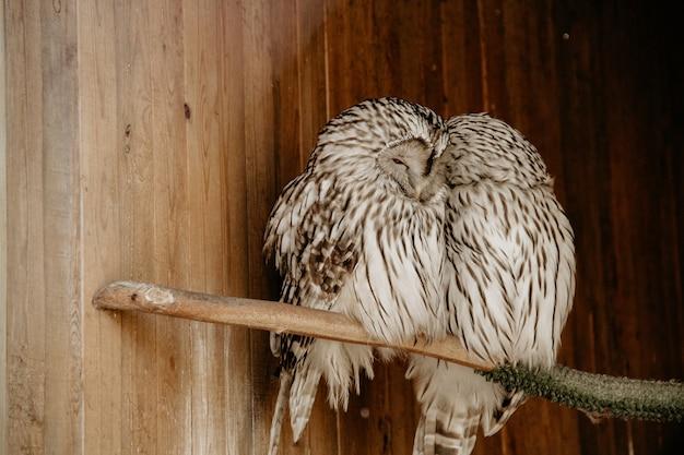 Twee mooie witte uilen die samen op het takje zitten