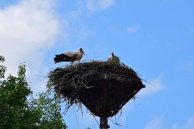 Twee ooievaars maakten een groot nest van takken op een pilaar tegen de blauwe lucht