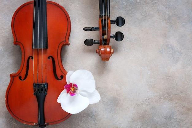 Twee oude violen en witte orchideebloem. hoogste mening, close-up op lichte concrete achtergrond