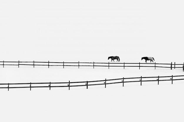 Twee paarden door hekken op een besneeuwd veld