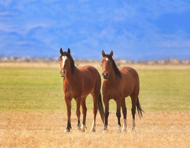 Twee paarden staan samen in veld