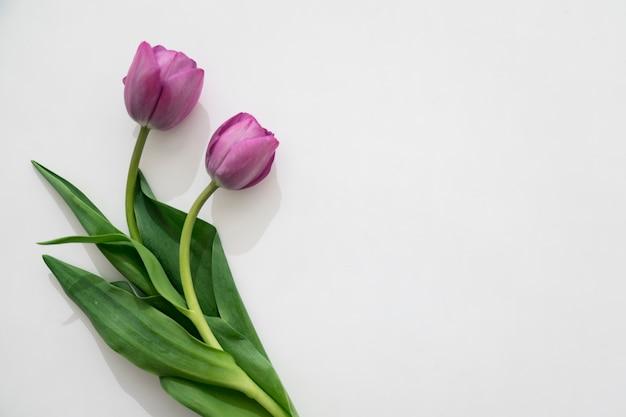 Twee paarse tulpen