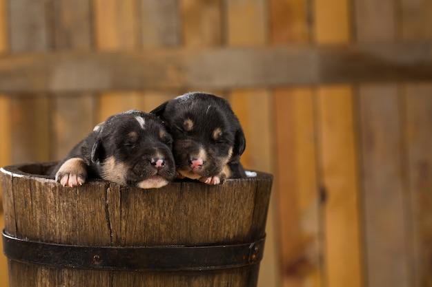 Twee pasgeboren puppies in een mandje