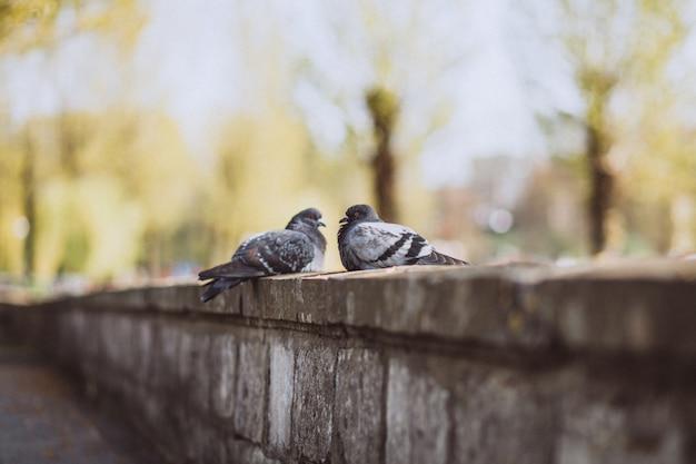 Twee piggeons die op steenomheining zitten in park