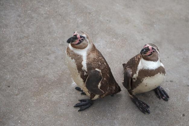 Twee pinguïns die zich op rots bevinden en omhoog kijken, bekijken van bovenaf