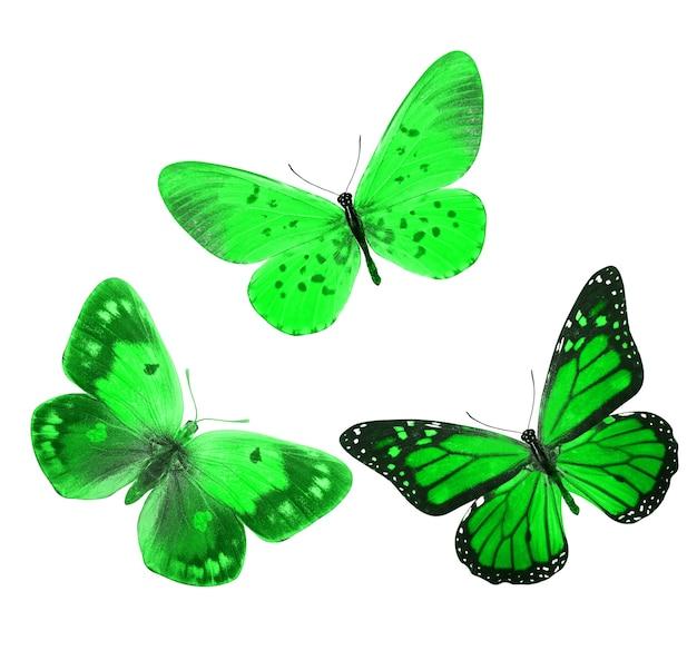 Twee prachtige groene tropische vlinders geïsoleerd op een witte achtergrond. motten voor ontwerp