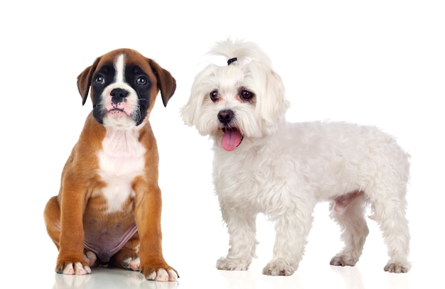 Twee prachtige honden