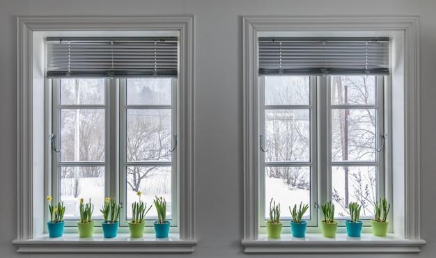Twee ramen versierd met kleurrijke bloempotten van dwerggele narcissen, narcissen. lente met sneeuw buiten.