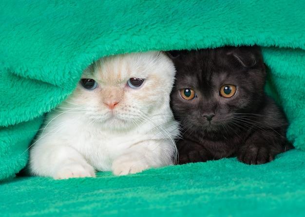 Twee schattige kleine kittens die onder de zachte, warme groene deken uit gluren