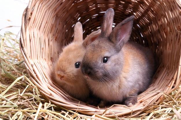 Twee schattige kleine konijnen spelen graag ondeugend in manden van hout en stro.
