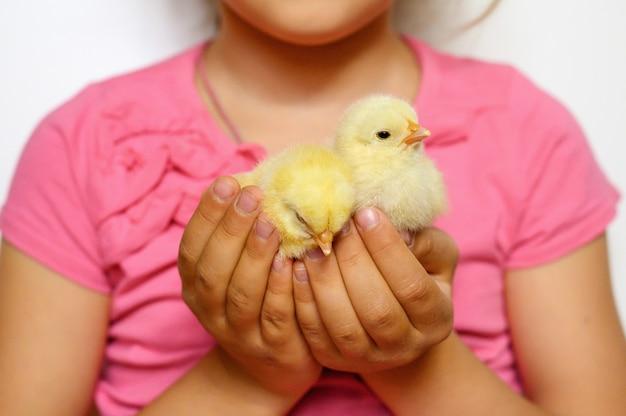 Twee schattige kleine pasgeboren gele kuikens in de handen van het kind meisje