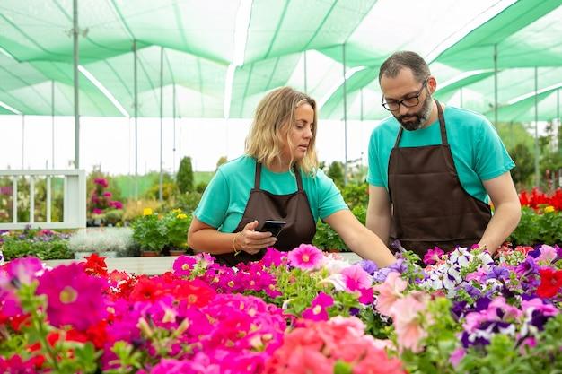 Twee serieuze tuinlieden die petunia's voor foto kiezen