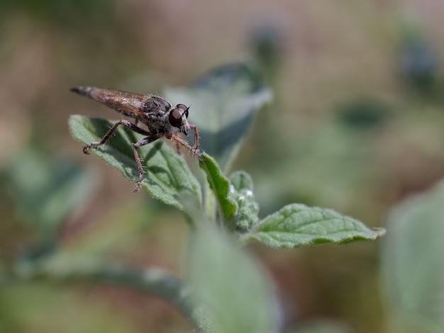 Twee soorten vliegen gefotografeerd in hun natuurlijke omgeving
