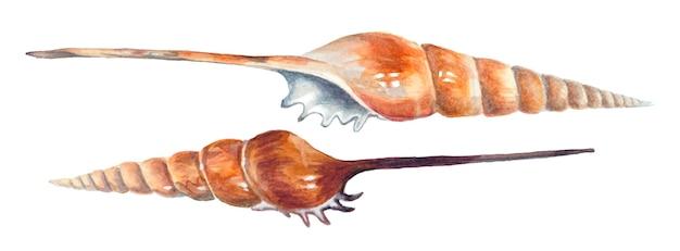 Twee spiraalvormige zeeschelpen geïsoleerd op een witte achtergrond. aquarel schilderij