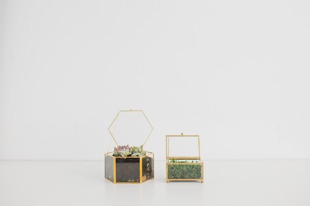 Twee terrarium op een witte achtergrond