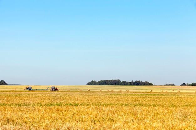 Twee tractoren die stapels stro verzamelen tijdens het oogstbedrijf. foto met blauwe lucht. focus op landbouwmachines die in het veld over de weg rijden