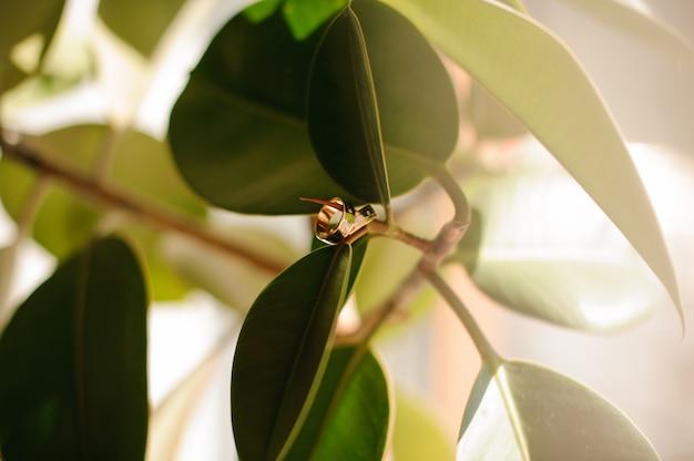Twee trouwringen die op een groene boomtak hangen