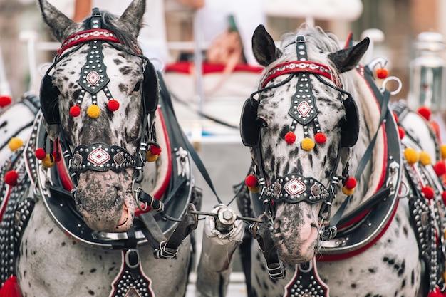 Twee versierde paarden voor het berijden van toeristen in een rijtuig.