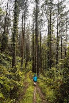 Twee wandelaars in regenjassen lopen door een bos in de regen