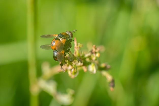 Twee wespen bovenop elkaar in het gras. hoge kwaliteit foto