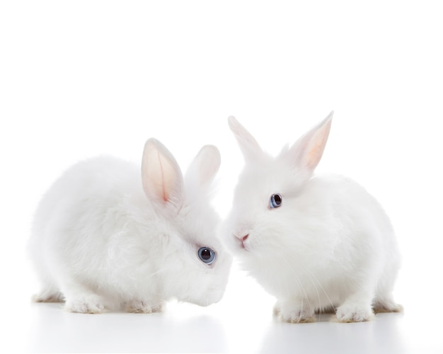 Twee witte konijnen geïsoleerd op een witte achtergrond
