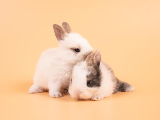 Twee witte konijnen zittend op een gele achtergrond. twee mooie konijnen die samen zitten