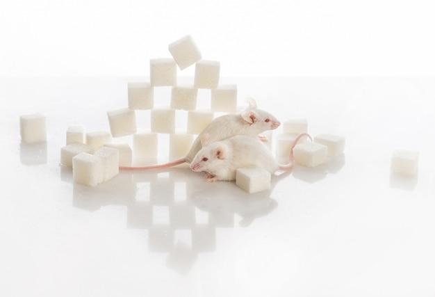 Twee witte laboratoriummuizen dichtbij de piramide van suikerkubussen, diabetesconcept