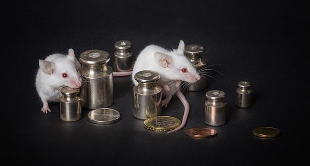 Twee witte laboratoriummuizen met gewichten en muntstukken op een grijze achtergrond. het concept van economische activiteit