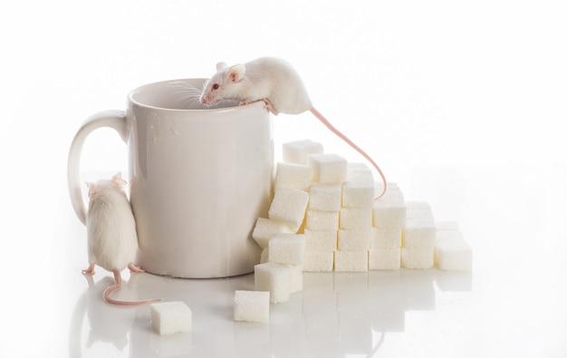 Twee witte muizen die de treden van de suikerkubussen en een kop, diabetesconcept kruipen