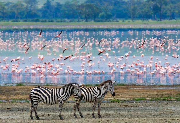 Twee zebra's en flamingo's. kenia. tanzania. nationaal park. serengeti. maasai mara.