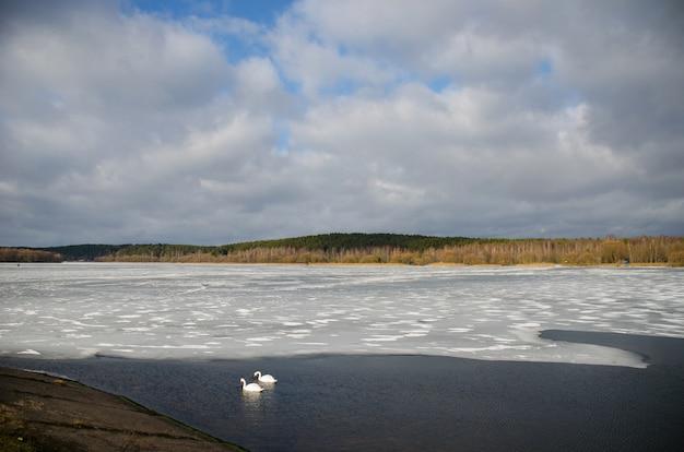 Twee zwanen op de rivier in de buurt van het ijs