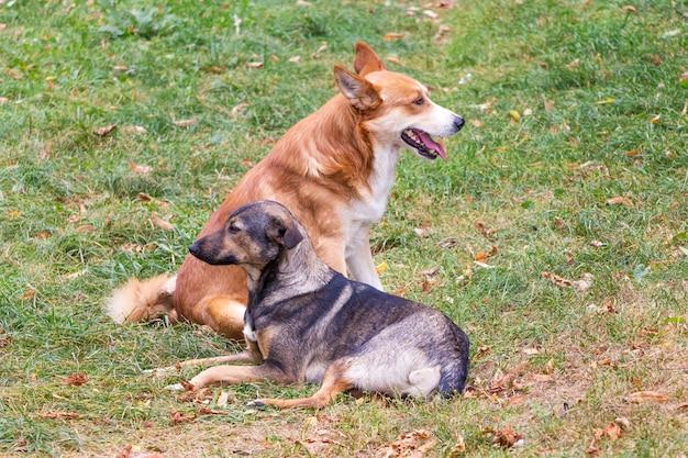 Twee zwerfhonden liggen in het park op het gras_