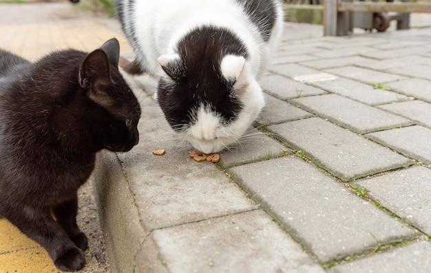 Twee zwerfkatten eten in de herfst droogvoer op de stoep. help zwerfdieren, eten.