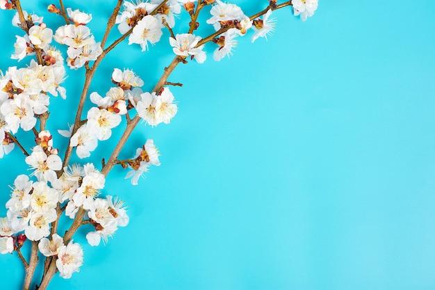 Twijgen van de abrikozenboom met bloemen op een blauwe achtergrond.