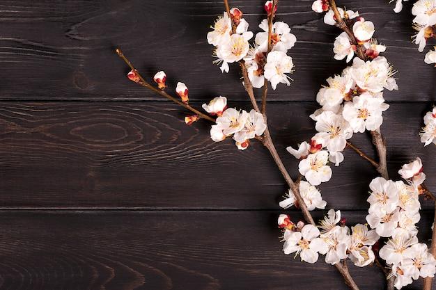 Twijgen van de abrikozenboom met bloemen op houten achtergrond.