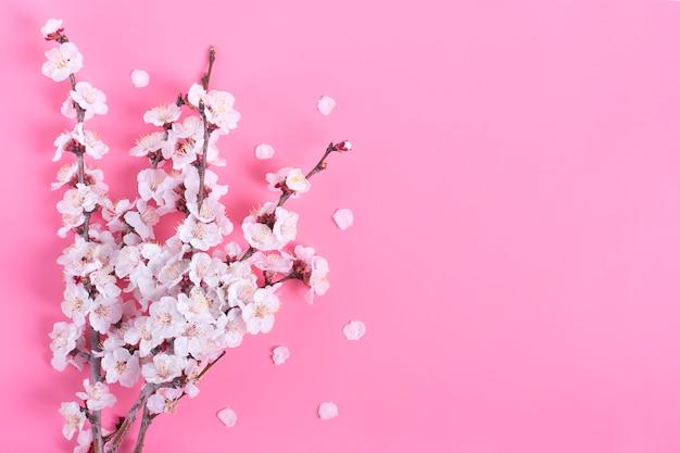 Twijgen van de abrikozenboom met bloemen op roze achtergrond. plat leggen