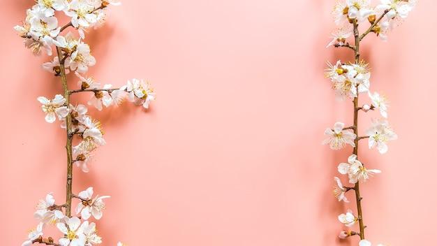 Twijgen van de abrikozenboom met bloemen op roze