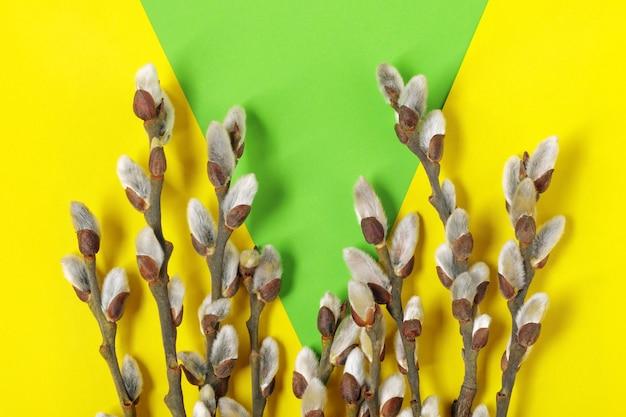 Twijgen van wilg met pussy katjes op gele en groene achtergrond. lente bloemen plat lag achtergrond.