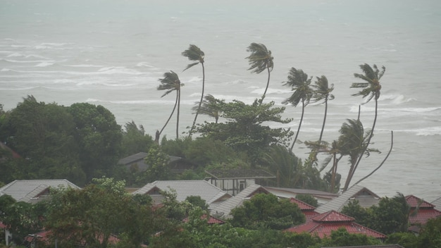 Tyfoon, oceaanstrand. natuurramp orkaan. sterke cycloonwind en palmen. tropische storm.