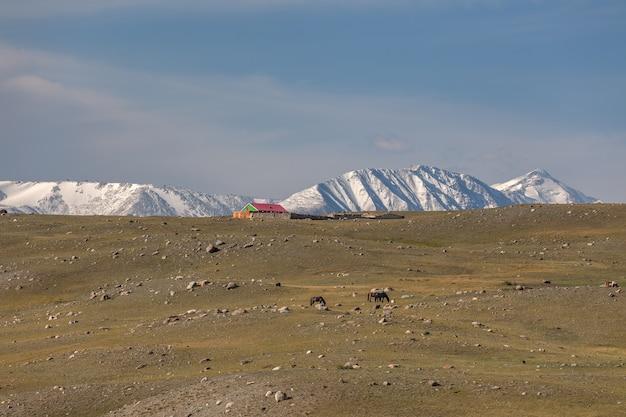 Typisch veelkleurig mongools huis in de steppen van het altai-gebergte