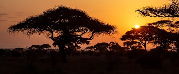 Typische iconische afrikaanse zonsondergang met acaciaboom in serengeti, tanzania. banner groot formaat.