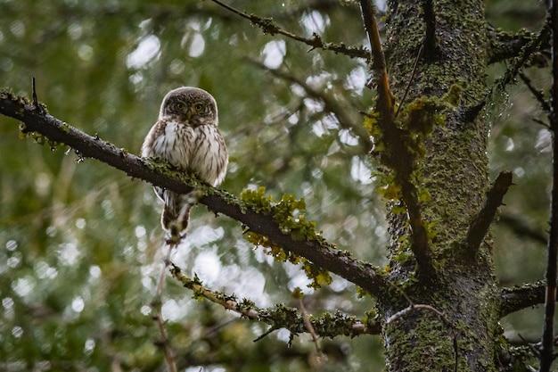 Uil zittend op een boomtak en camera kijken
