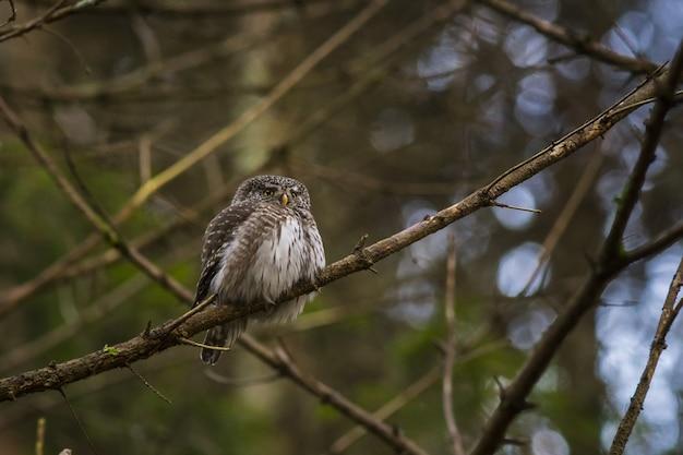 Uil zittend op een boomtak