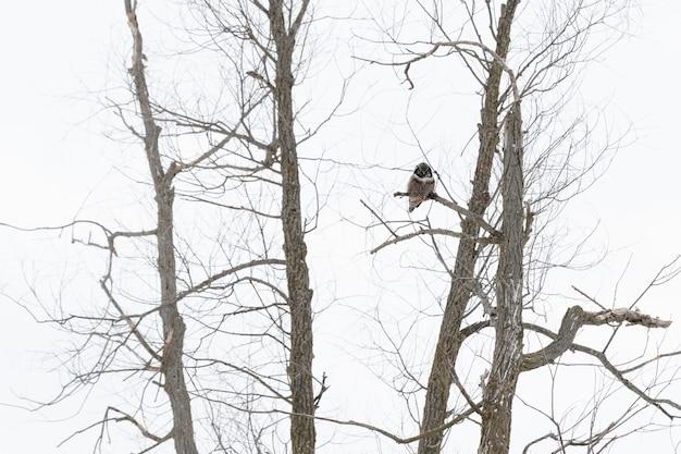 Uil zittend op een tak in de winter overdag