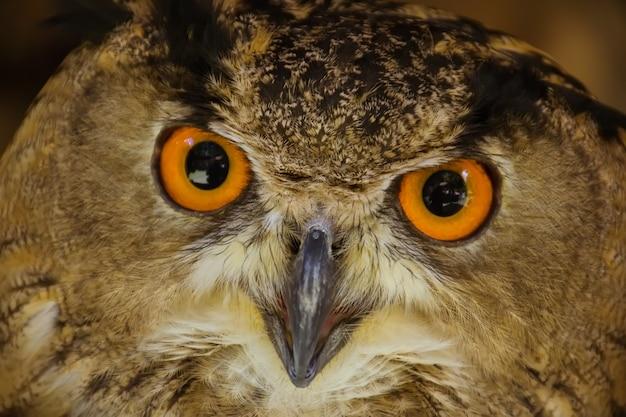 Uilen, oog van bruine uilenachtergrond.